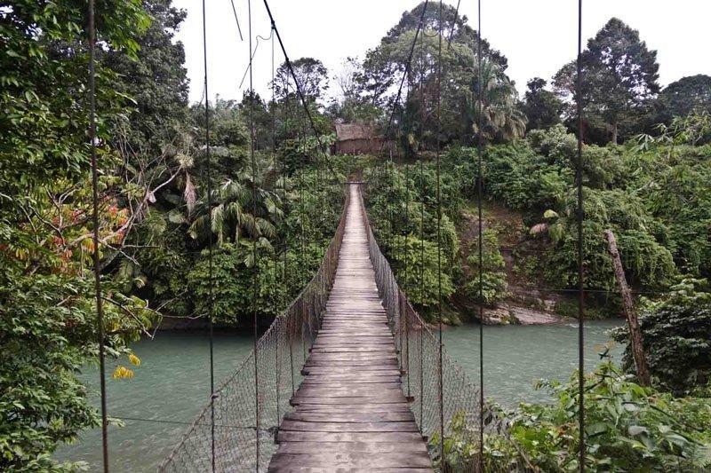 Indonesia Sumatra Tangkahan