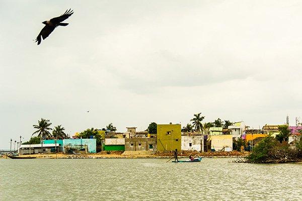 Cosa Vedere Pulicat Bird Sanctuary Chennai
