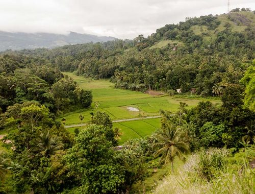 Quanto Costa Viaggiare Sri Lanka
