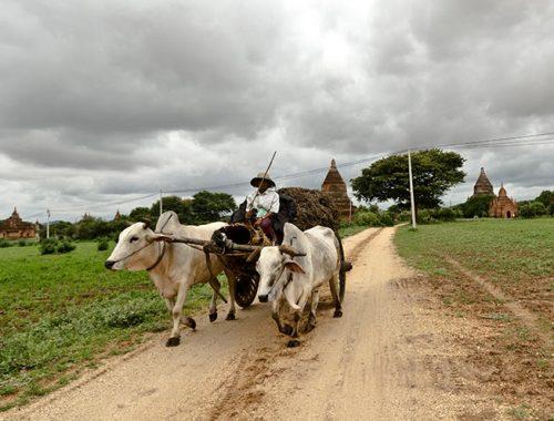 Vaccinazioni Consigliate Viaggio Sud Est Asiatico