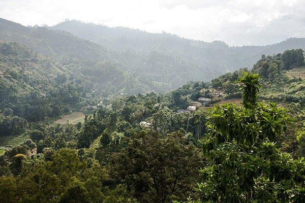 Cosa Fare Sri Lanka Visita Fabbriche tè