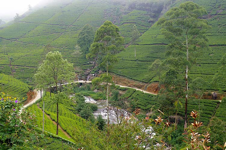Cosa Vedere Nuwara Eliya Piccola Inghilterra Sri Lanka