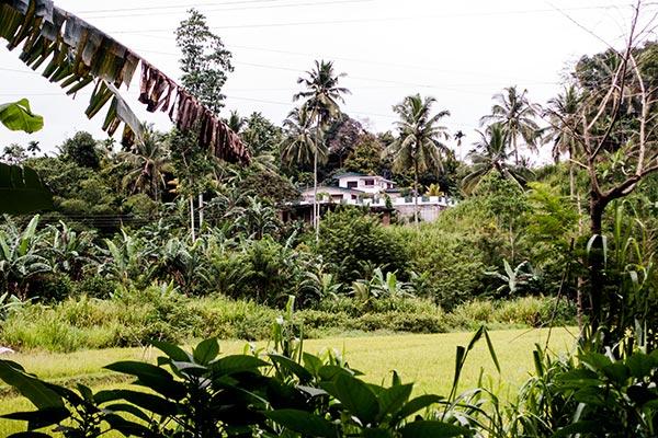 Viaggio Treno Sri Lanka Panorami Piantagioni Te