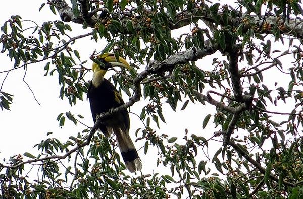 Guida Parco Nazionale Khao Yai Thailandia