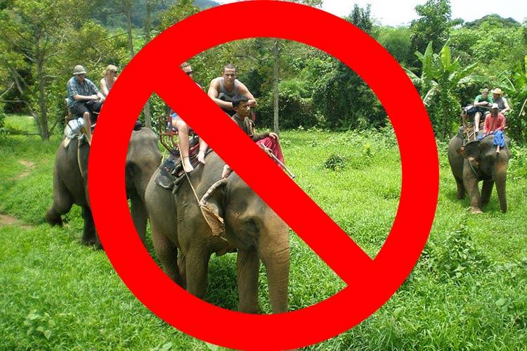 Scegliere Elephant Camp Etico Cruelty Free Chiang Mai