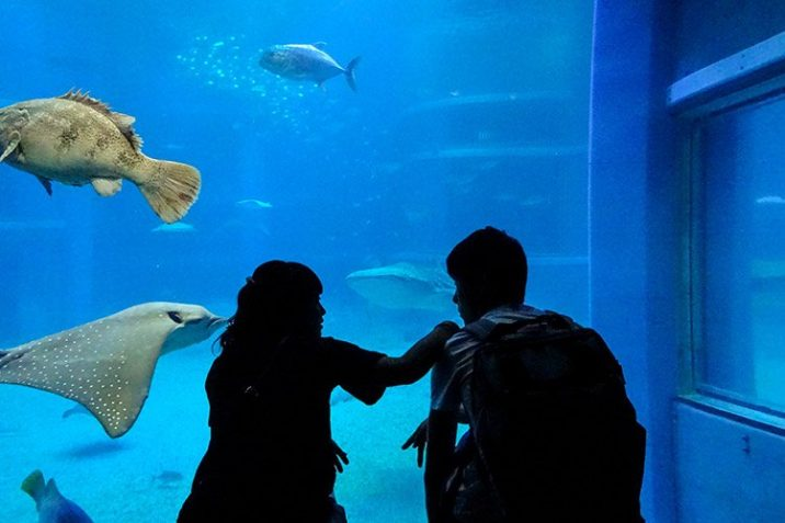 Guida Completa Osaka Aquarium Kaiyukan Giappone