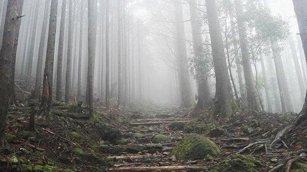 Come Organizzare Trekking Kumano Kodo Giappone