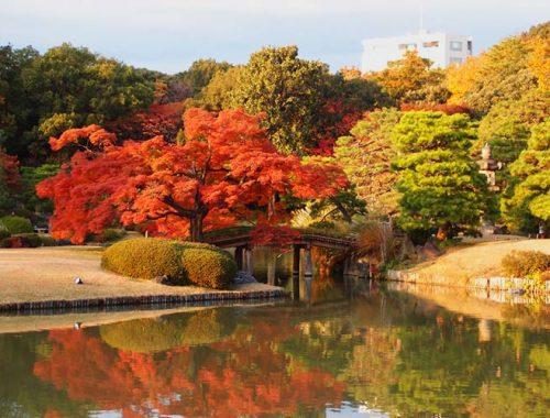 Foliage Autunno Tokyo Parchi Giardini