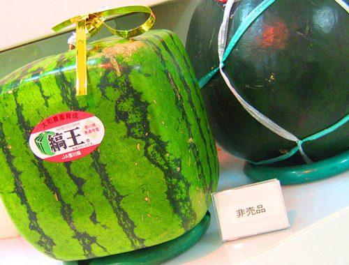 Frutta Verdura Tradizionali Cucina Giapponese Quanto Costano