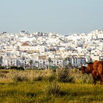 Cosa Fare Conil De La Frontera Andalusia Spiaggia Mare Vento