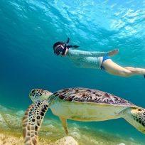 Dove Fare Snorkeling Diving Koh Samu Thailandia