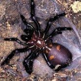 Animali Pericolosi Australia come Evitarli Dove Quando