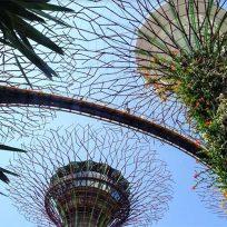 Marina-Bay-Singapore-Cosa-Vedere-Fare-Gardens-By-The-Bay