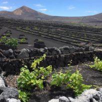 Geria Lanzarote Migliori Cantine Bodegas Degustazioni Vino